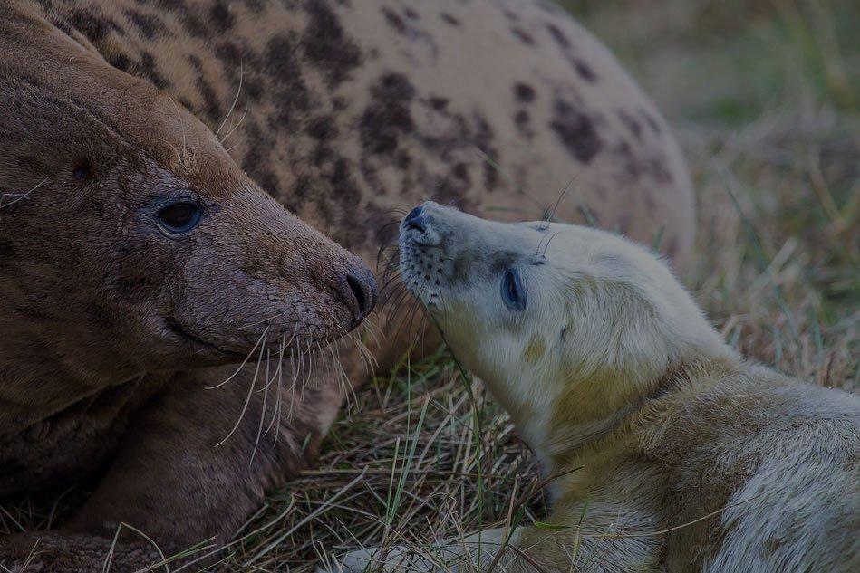Seals-